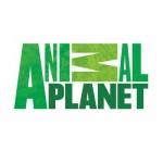 Animal Planet Logo Font